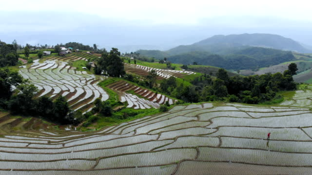 aerial view shot of rice terraces in the northern thailand in rainy day - rice terrace stock videos and b-roll footage