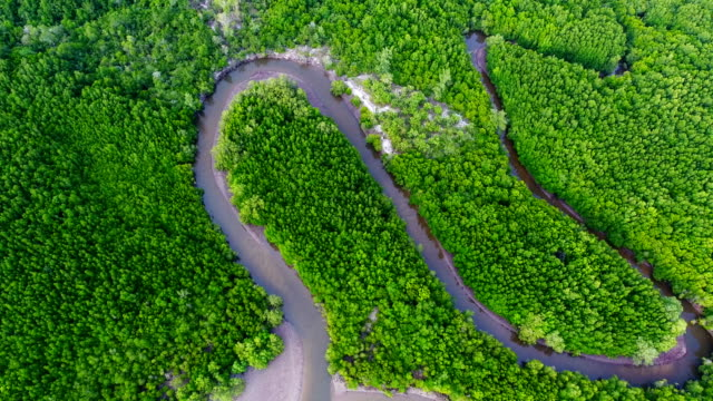 aerial view shot tropical beach sea with long tail boat in south thailand - mangrove forest stock videos & royalty-free footage