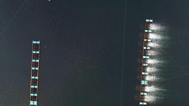 aerial view shrimp farm, prawn farming - prawn stock videos & royalty-free footage