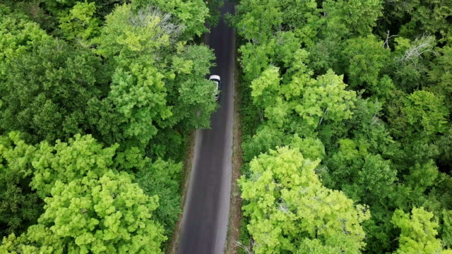 aerial view single lane road trough wild forest - road trip stock videos & royalty-free footage