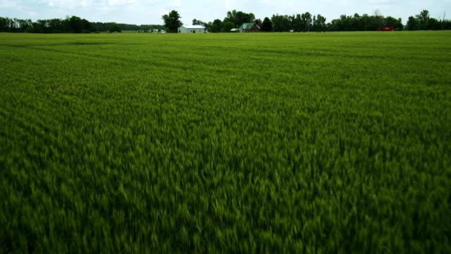 stockvideo's en b-roll-footage met aerial view skimming wheat field - volkorentarwe