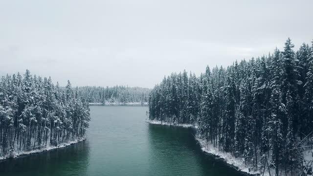 vidéos et rushes de forêt couverte de neige de vue aérienne - pin