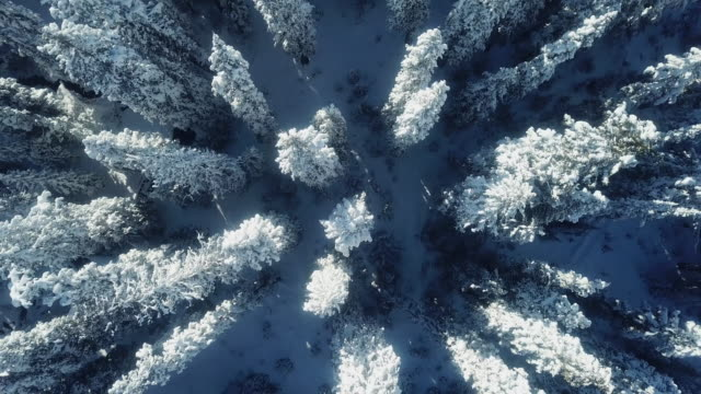 aerial view snow pine tree - capanna di legno video stock e b–roll