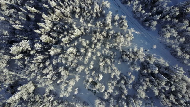 vídeos de stock e filmes b-roll de aerial view snowy mountains - coniferous