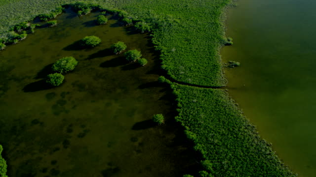 Aerial view Southern Florida National Park tropical wetlands