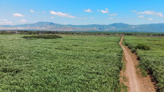 vídeos y material grabado en eventos de stock de aerial view sugarcane fields & a dirt track heading towards mountains - hispaniola