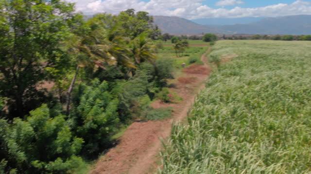vídeos y material grabado en eventos de stock de aerial view sugarcane fields and dirt track with vehicle - hispaniola