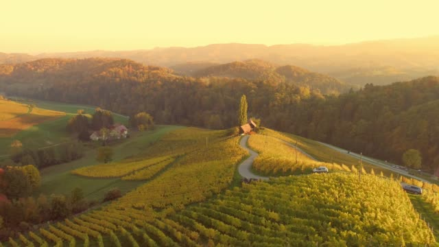 ws aerial view sunny,tranquil,idyllic rural vineyards,spicnik,slovenia - vineyard stock videos & royalty-free footage