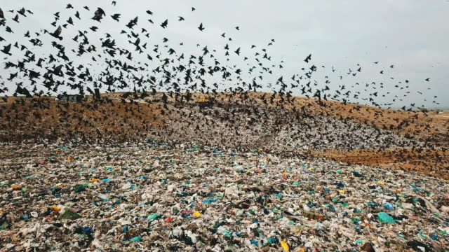 aerial view - thousands of common starlings (sturnus vulgaris) fly towards camera / duda'im rubbish dump, southern israel - rubbish dump stock videos & royalty-free footage