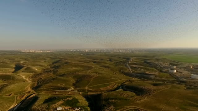 vidéos et rushes de aerial view - thousands of common starlings (sturnus vulgaris) fly towards camera / duda'im rubbish dump, southern israel - etourneaux