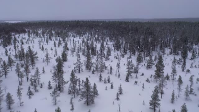 vídeos de stock, filmes e b-roll de a inclinação aérea da floresta de pinho na estação profunda do inverno da neve - pinhal