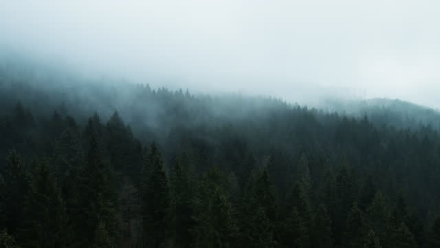 aerial view time lapse of fog and clouds rolling over spruce forest in autumn - pinaceae stock videos & royalty-free footage