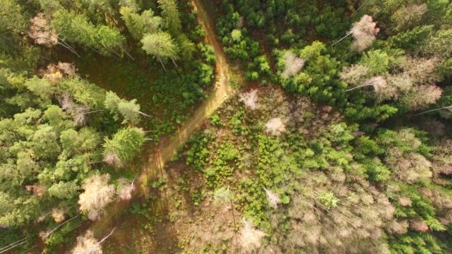 Aerial view: tiny road in bavarian forest in autumn