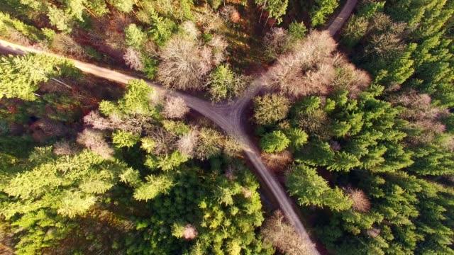 Luftaufnahme: kleine Straße im Bayerischen Wald im Herbst
