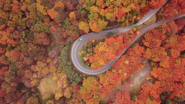 vídeos de stock e filmes b-roll de aerial view top on the road curve in the forest change color in autumn time at japan - vista de cima para baixo