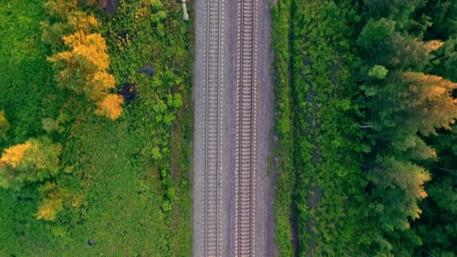aerial view: train among tree band at the forest scene in summer. - railway track stock videos & royalty-free footage