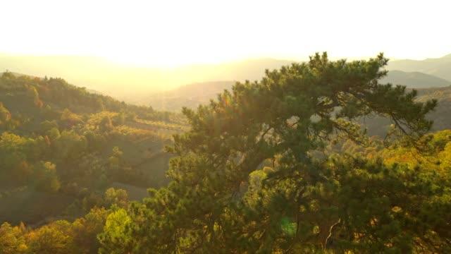 vídeos de stock e filmes b-roll de ws aerial view tranquil,idyllic rolling autumn landscape stock video - focagem difusa