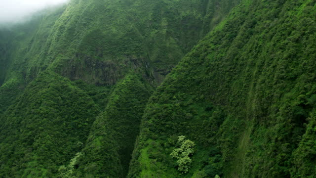 aerial view tropical rainforest valley lush foliage maui - polynesian ethnicity stock videos & royalty-free footage