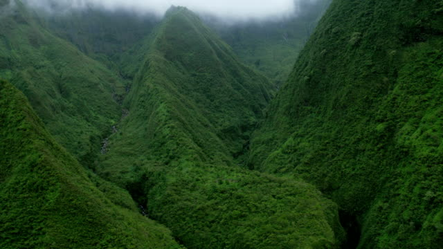 aerial view tropical rainforest valley lush foliage maui - hawaii inselgruppe stock-videos und b-roll-filmmaterial