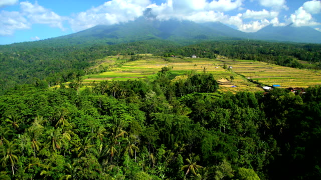 aerial view ubud plantation farming rice terraces bali - ubud district stock videos & royalty-free footage
