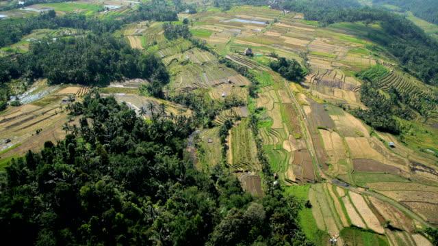 aerial view ubud plantation farming rice terraces bali - plantation stock videos & royalty-free footage