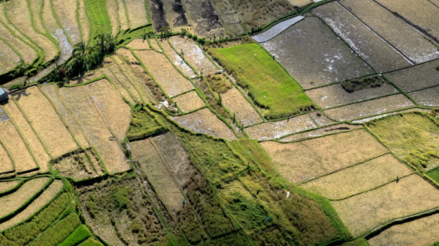 aerial view ubud plantation farming rice terraces bali - vereinte nationen stock-videos und b-roll-filmmaterial