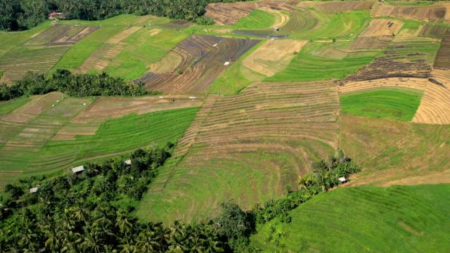 Aerial view Ubud plantation farming rice terraces Bali