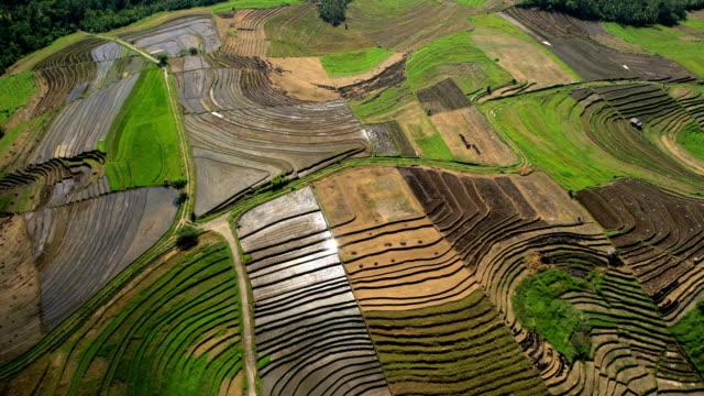 vídeos y material grabado en eventos de stock de aerial view ubud plantation farming rice terraces bali - cultura indonesia