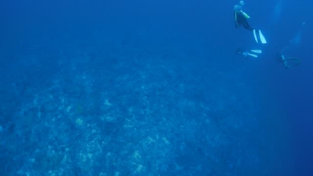 vídeos de stock e filmes b-roll de aerial view undersea - oahu