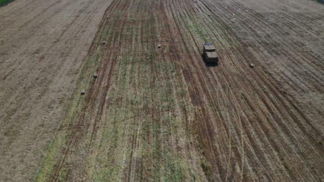 vídeos de stock e filmes b-roll de aerial view vehicles a tractor  carry round cylindrical straw stacks for transportation to sites - seco