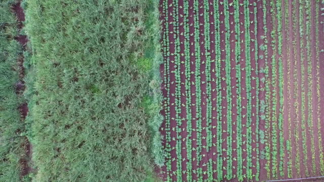aerial view - organic farm stock videos & royalty-free footage