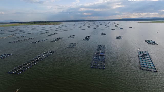 aerial view : villager has fish and shrimp farm in floating basket for keeping live fish in water. - enclosure stock videos and b-roll footage
