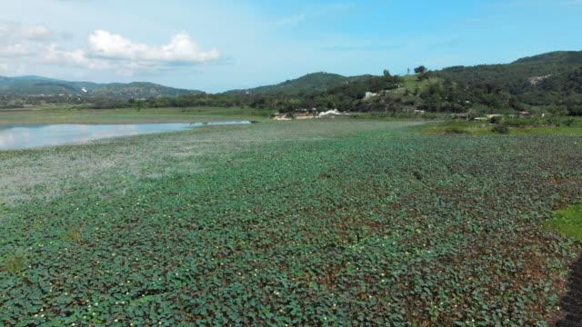 vídeos y material grabado en eventos de stock de aerial view water hyacinth & cultivated land on the shores of lake azuei - hispaniola