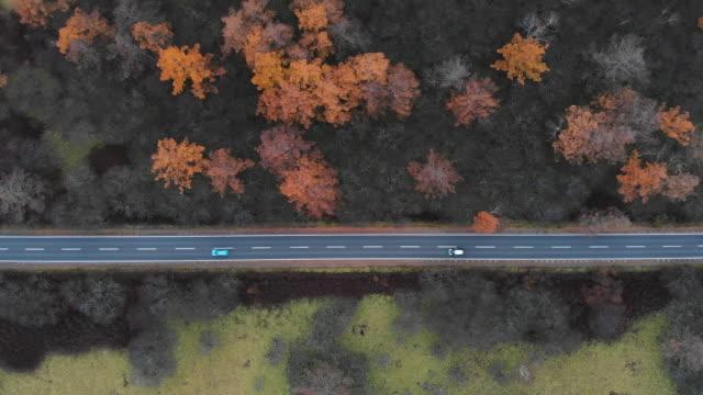 luftbild mit dolly links neben der landschaftlich schöne strecke am senjogahara marschland in herbstsaison, nikko, japan. - geschäftsreise stock-videos und b-roll-filmmaterial