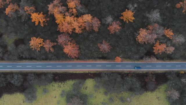 vídeos de stock e filmes b-roll de aerial view with lockdown of scenic route at senjogahara marshland in autumn season, nikko, japan. - vista de cima para baixo
