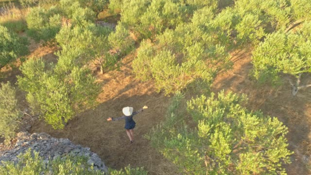 ms aerial view woman in sun hat walking among sunny olive trees - mid adult women stock videos & royalty-free footage