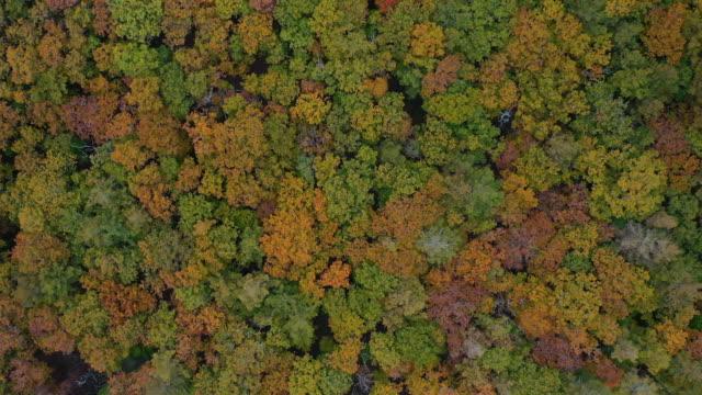 vidéos et rushes de vue aérienne merveilleux arbre de foliate change de couleur de la lumière du soleil en automne - conifère