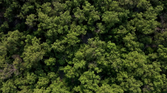 4k aerial view zoom out tropical forest - zoom in stock videos & royalty-free footage