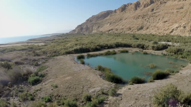 aerial view,einot tzukim nature reserve on the northwestern shore of the dead sea, judea desert, israel - desert oasis stock videos & royalty-free footage