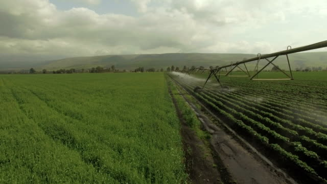 aerial view-modern agriculture in israel-view of large irrigation sprinklers spraying water over lush crops - irrigation equipment stock videos and b-roll footage