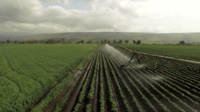 aerial view-modern agriculture in israel-view of large irrigation sprinklers spraying water over lush crops - irrigation equipment stock videos & royalty-free footage