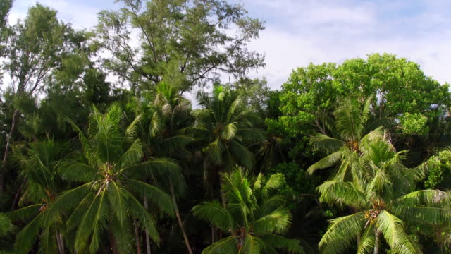 aerial views coconut palm trees in papua new guinea - papua stock videos and b-roll footage
