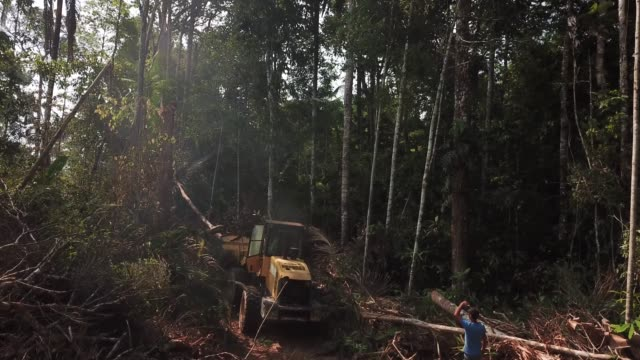 aerial views of a tractor being used to expand cattle ranchers land into the adjacent forest near itapuã do oeste in the brazilian state of rondonia... - cattle stock videos & royalty-free footage