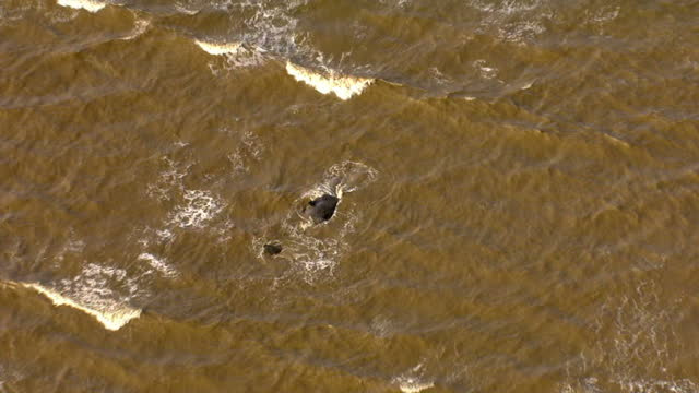 aerial views of beached sperm whale stranded on hunstanton beach. on february 04, 2016 in hunstanton, england. - sperm whale stock videos & royalty-free footage