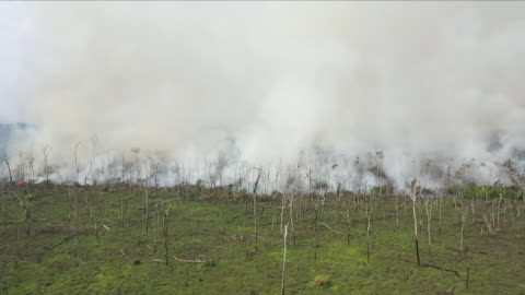 vídeos y material grabado en eventos de stock de aerial views of fire in the amazon rainforest - región del amazonas