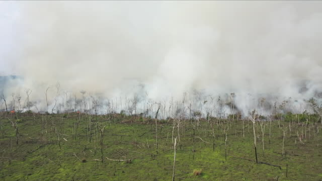 aerial views of fire in the amazon rainforest - rainforest stock videos & royalty-free footage