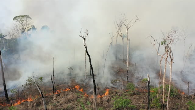 stockvideo's en b-roll-footage met aerial views of fire in the amazon rainforest - vernieling