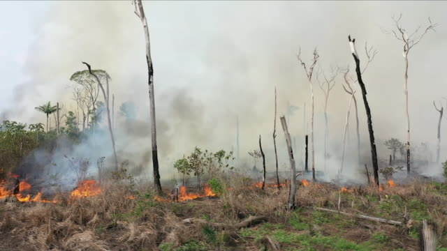aerial views of fire in the amazon rainforest - industria forestale video stock e b–roll