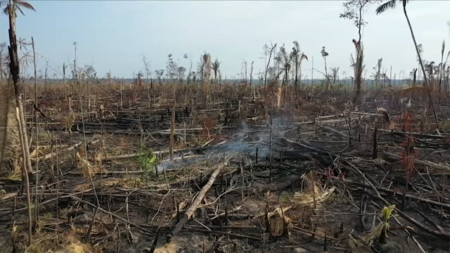 aerial views of fire in the amazon rainforest - tree trunk stock videos & royalty-free footage