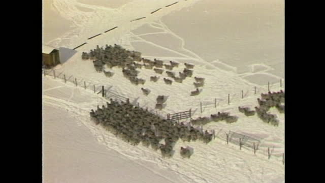 aerial views of livestock gather around feeding area in snowy field in south-east england during arctic blizzards across the uk in january 1987. - feeding stock videos & royalty-free footage